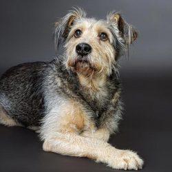 phinephoto-berlin-portrait-hund-hundeblick